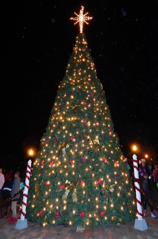 Powder Springs 22 foot Christmas Tree light up with Christmas lights